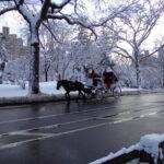O capítulo sobre o Central Park