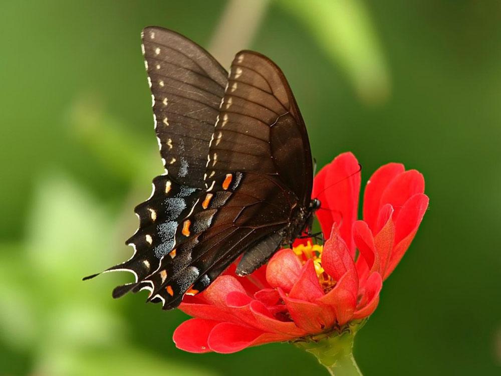 vida-das-borboletas