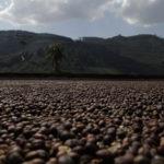 Kitchenaid, Suplicy e a viagem pelo ciclo do café