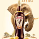O lançamento do licor Amarula e a preservação dos elefantes