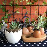 Vídeo novo: ovos com suculentas