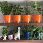 Vídeo novo: como montar uma horta em casa
