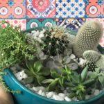 Vídeo novo: como montar um mini jardim de suculentas