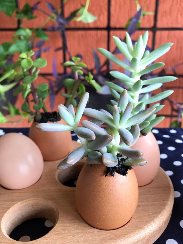suculentas nos ovos 3 sugestões de faça você mesmo para a Páscoa